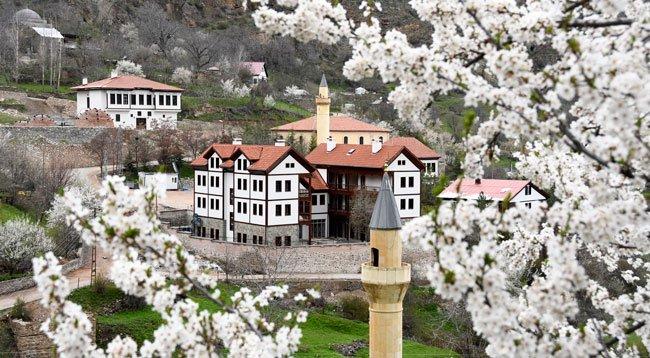 Tarihi Süleymaniye Mahallesi'nde Ağaçlar Çiçek Açtı
