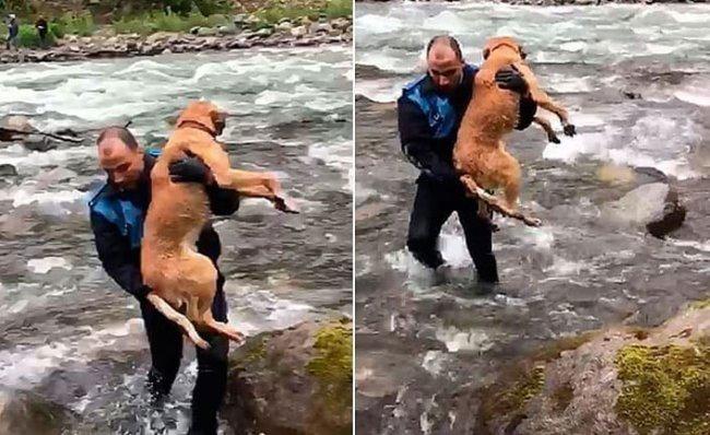 Derede Mahsur Kalan Köpeği Kurtardılar