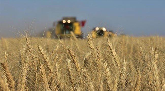 Buğday Verimi İçin Çiftçiye Gübreleme ve Süne Uyarısı